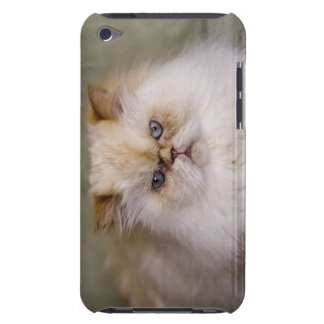 A mad, upset, reclining Flame Point Himalayan Case-Mate iPod Touch Case