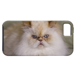 A mad, upset, reclining Flame Point Himalayan iPhone SE/5/5s Case