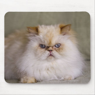 A mad, upset, reclining Flame Point Himalayan Mouse Pad