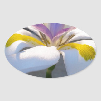 A magnificient Lily .jpg Oval Sticker