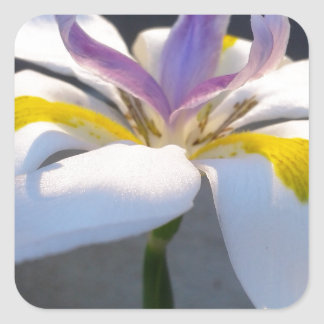 A magnificient Lily .jpg Square Sticker