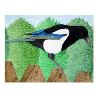 A Magpie perched on a fence Post Cards