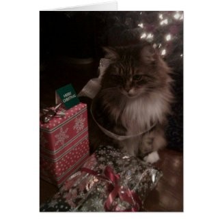 A Maine Coon Christmas Greeting Cards