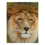 A Majestic lion Custom Letterhead
