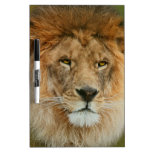 A Majestic lion Dry-Erase Board