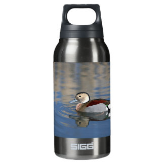 A Male Blue Billed Ringed Teal Swims in a pond Insulated Water Bottle