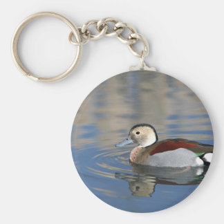 A Male Blue Billed Ringed Teal Swims in a pond Basic Round Button Keychain
