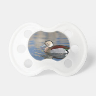 A Male Blue Billed Ringed Teal Swims in a pond Pacifier