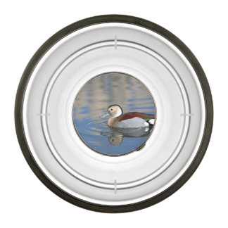 A Male Blue Billed Ringed Teal Swims in a pond Pet Bowl