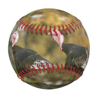 A male Female Turkey Pair Photograph in Fall Baseball