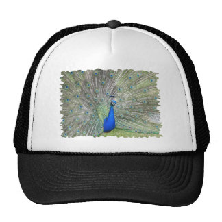 A Male Indian Peacock Fans it's tail Feathers Trucker Hat