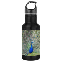 A Male Indian Peacock Fans it's tail Feathers Water Bottle