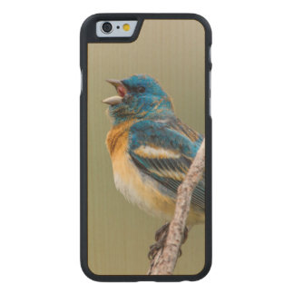A Male Lazuli Bunting Songbird Singing Carved Maple iPhone 6 Case