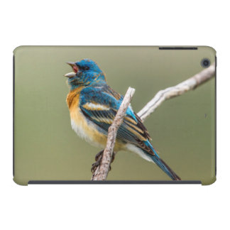 A Male Lazuli Bunting Songbird Singing iPad Mini Cases