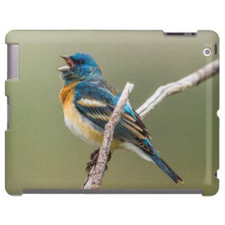 A Male Lazuli Bunting Songbird Singing