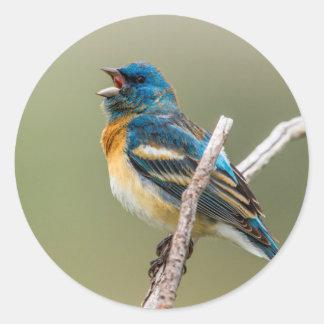 A Male Lazuli Bunting Songbird Singing Classic Round Sticker
