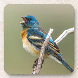 A Male Lazuli Bunting Songbird Singing Drink Coasters