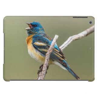 A Male Lazuli Bunting Songbird Singing Cover For iPad Air