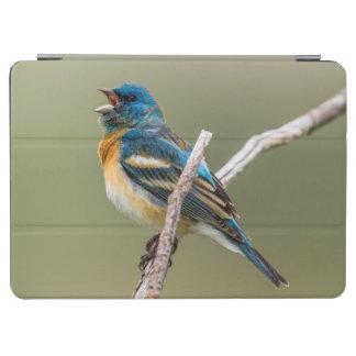 A Male Lazuli Bunting Songbird Singing iPad Air Cover