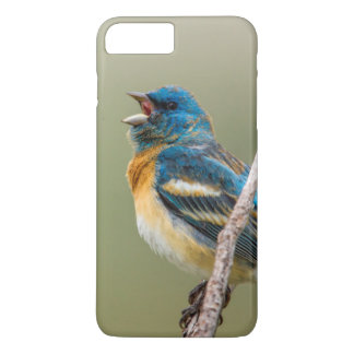 A Male Lazuli Bunting Songbird Singing iPhone 7 Plus Case