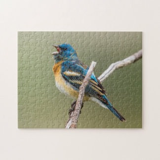 A Male Lazuli Bunting Songbird Singing Jigsaw Puzzle