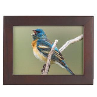 A Male Lazuli Bunting Songbird Singing Memory Box