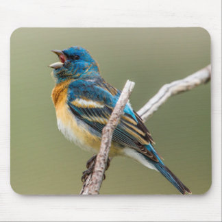 A Male Lazuli Bunting Songbird Singing Mouse Pad