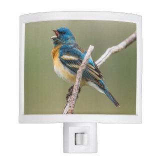 A Male Lazuli Bunting Songbird Singing Night Light