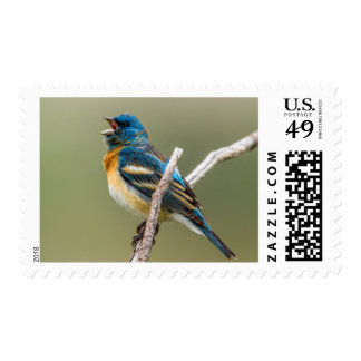 A Male Lazuli Bunting Songbird Singing Postage Stamps