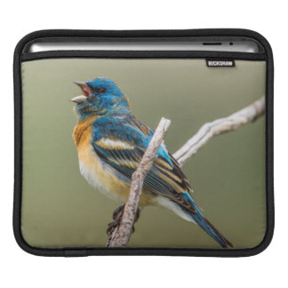 A Male Lazuli Bunting Songbird Singing Sleeve For iPads