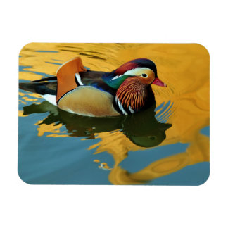 A Male Mandarin Duck Aix Galericulata At Sunset Magnet
