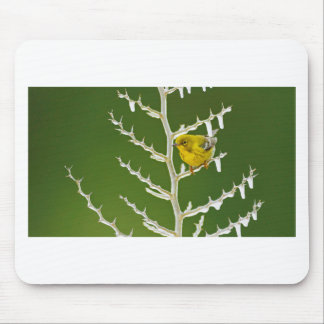 A Male Pine Warbler Perched on an Icy Branch Mouse Pad