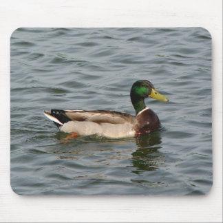 A Mallard Duck at the Lake Mouse Pad