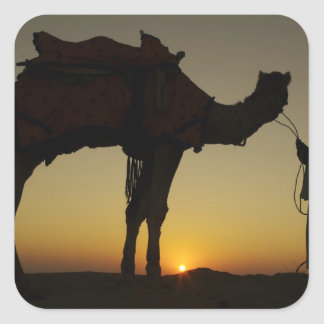a man and his camel Silhouetted at sunset on the Square Sticker