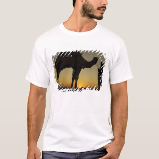 a man and his camel Silhouetted at sunset on the T-Shirt