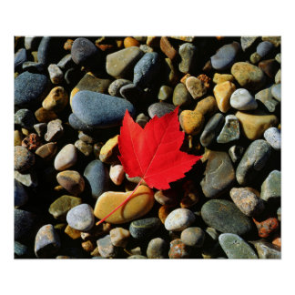 A Maple leaf on a Rock Background Poster
