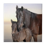 A mare and her baby foal ceramic tiles