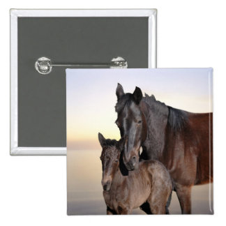 A mare and her baby foal pinback button