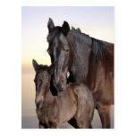 A mare and her baby foal postcards