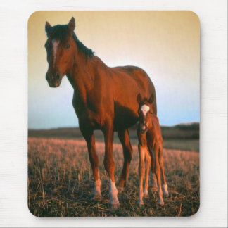 A mare and her foal mouse pad
