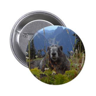 A marmot in Paradise in Mount Rainier National Par Buttons