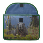 A marmot in Paradise in Mount Rainier National Par Sleeve For MacBooks