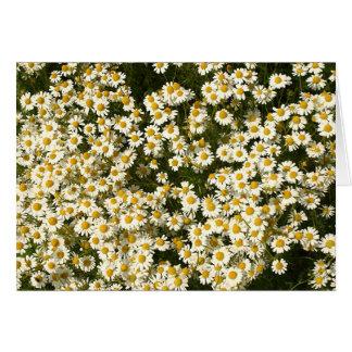 A mass of daisies card