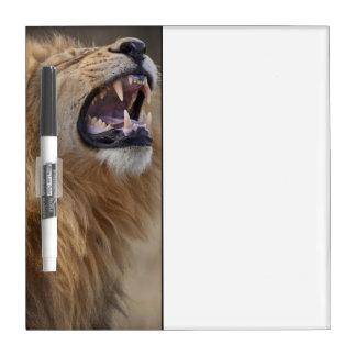 A mature male lion (Panthera leo) in the Savuti Dry Erase Boards