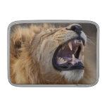A mature male lion (Panthera leo) in the Savuti MacBook Air Sleeve