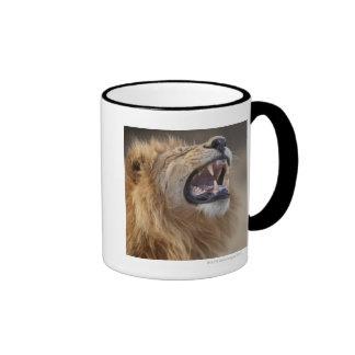 A mature male lion (Panthera leo) in the Savuti Mugs
