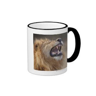 A mature male lion (Panthera leo) in the Savuti Coffee Mugs
