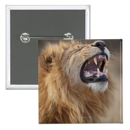 A mature male lion (Panthera leo) in the Savuti Pinback Button