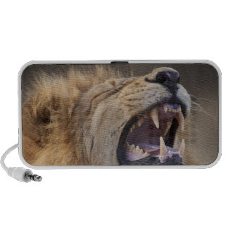 A mature male lion (Panthera leo) in the Savuti Mini Speakers