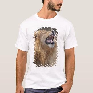 A mature male lion (Panthera leo) in the Savuti T-Shirt